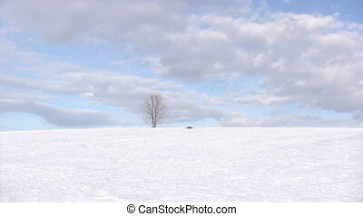 Single bare tree on winter day - Winter landscape of lonely...