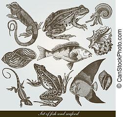 Seafood - Set: fish, shells and seafood