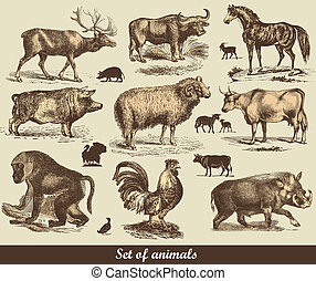 Animals - Set of animals