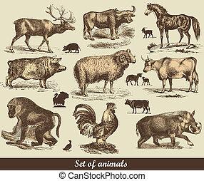 Animals - Set of animals