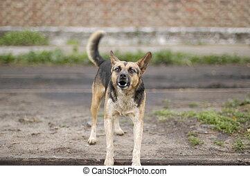 Mean Barking Dog