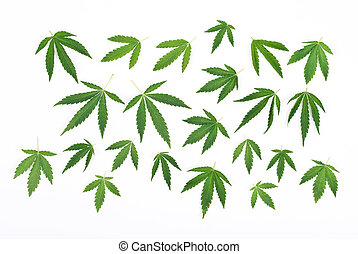 Cannabis leafs