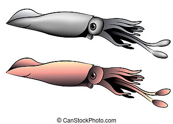 Squid, tattoo - Vector squid represented in the form of a...