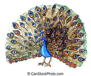 peacock - illustration of beautiful peacock