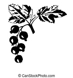 vector silhouette of the black currant on white background