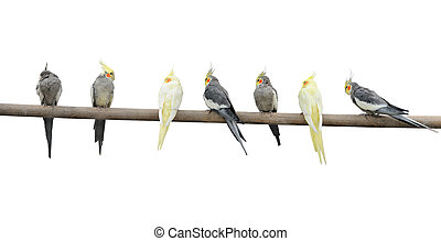 Color parrots on a pole. It is isolated on a white...