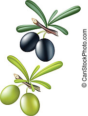 Olives - Collection of vector olives. Isolated over white