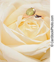 Ring in a white rose A jewelry on a blossoming bud of a...