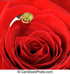 Ring in a red rose A jewelry on a blossoming bud of a flower...