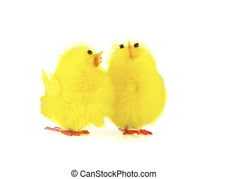 Two birds - Two yellow birds on a white background.