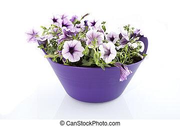 Purple flowers in a basket