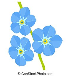 forget-me-not - illustration of forget-me-not on white