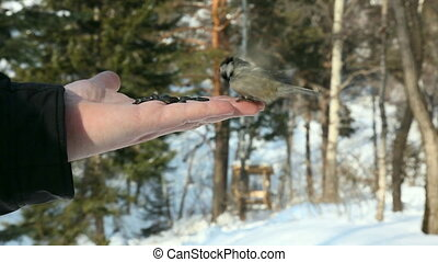 Birds. - Birds eating seeds from the hand.