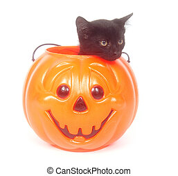 Black cat in plastic pumpkin - Black cat sitting inside of a...