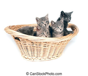Litter of gray kittens in a basket - A group of cute gray...