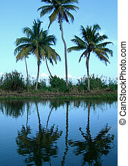 Tourism in Kerala India - Palm trees and rice fields on...