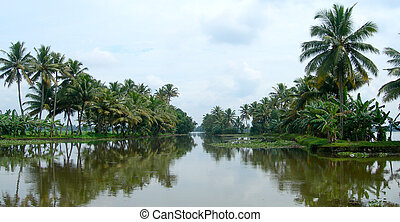 Tourism in Kerala India - Palm trees and lush vegetation on...