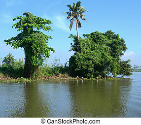 Tourism in Kerala India - Trees and lush vegetation on...