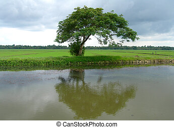 Tourism in Kerala India - Tees and rice fields on lagoon...