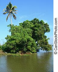Tourism in Kerala India - Lush vegetation on lagoon banks...