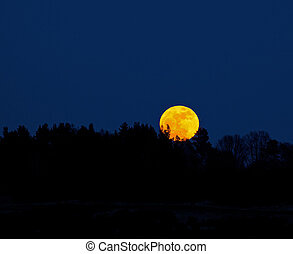 Super Moonrise on 19th March 2011 over Ashdown Forest in...