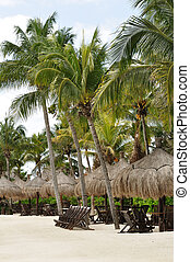 Wooden Beach Chairs under Palm Trees on Tropical Beach -...