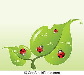 Ladybirds on a leaf