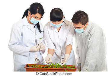 Agricultural researchers in laboratory with new plants in a...