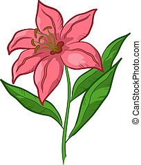 Flower lily