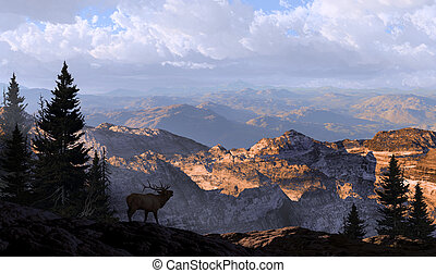 Elk Lookout Silhouette - A silhouetted elk looking into the...