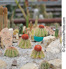 Cactus set Type of spiny succulent plant
