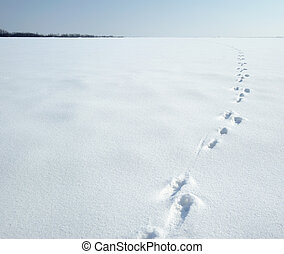 Traces of a hare on a snow. A print of paws on a winter...