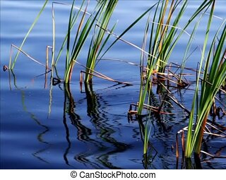 Reeds and Waves - sd - Loop with vibrant blue water, waves,...
