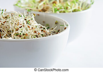 Beansprout Bowls Close Up - Close up (macro) of a white...
