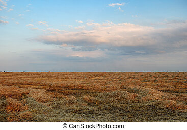 Field with hay cloudy sky