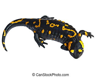fuego, salamandra