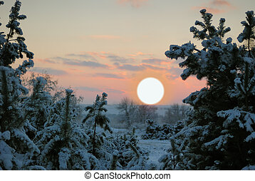winter sunset. The bright red sun above tops of fur-trees