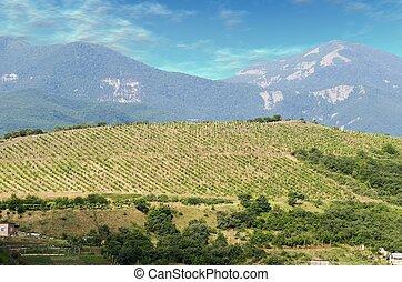 Vineyards at bottom of mountain 2 - Vineyards at bottom of...
