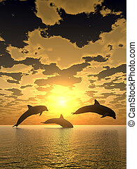 dolfijn, gele, ondergaande zon