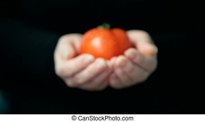 hands holding red fresh tomato