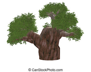baobab - The African tree - baobab completely isolated on a...