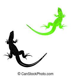 lizard - image of a lizard