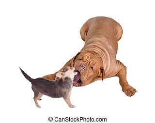 grande, pequeño, (huge, tiny), Perros, juego