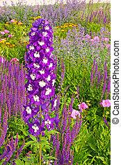 Delphinium flower known as larkspur in a garden