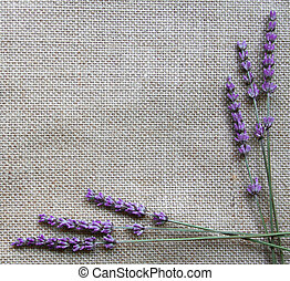 Lavender flowers on sackcloth background - Bunch of lavender...