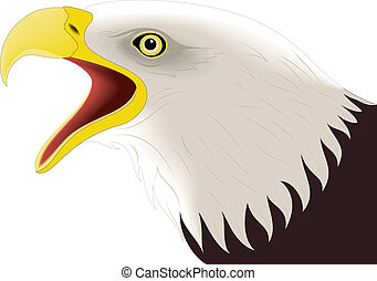Eagle 2 - illustration of colored eagle