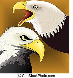 Eagle set vector 1