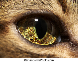 Cat eye - Close-up of a cat's eye