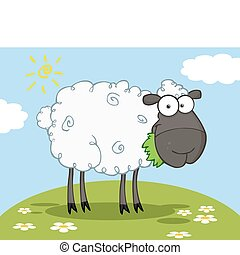 Black Barnyard Sheep Eating Grass