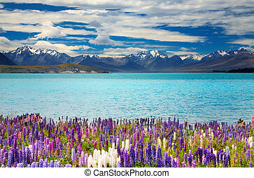 Lake Tekapo, New Zealand - Lake Tekapo, South Island, New...